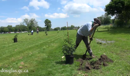 A new plantation of 120 trees