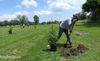 Plantation de 120 arbres à l\'Institut Douglas - Vidéos - Institut ...
