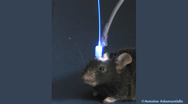 an analysis of the neural control of slow wave and rem sleep Slow-wave sleep is characterised by synchronised activity of neurons in the neo-cortex firing at a slow rate, between 05 and three times per second  an additional control group of rats were.